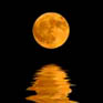 wine moon